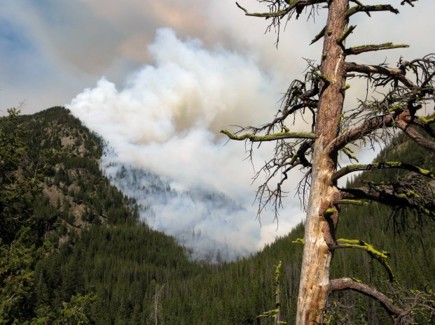 Photo by Mike Liu-USFS The Diamond Creek Fire, burning in the steep slopes of the Diamond Creek drainage of the Pasayten Wilderness has grown to more than 5000 acres. It is near the Billy Goat Trailhead and 16 air miles north of the community of Mazama.