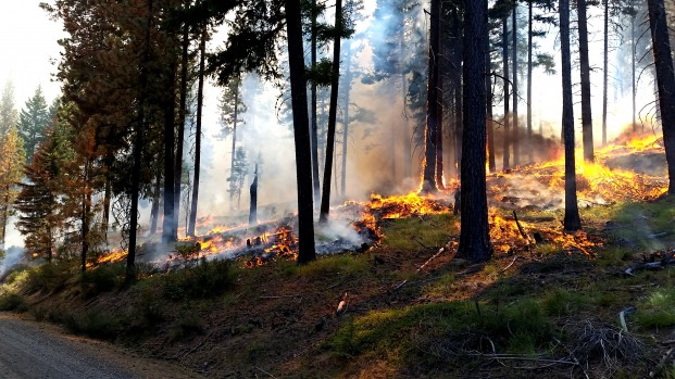 USFS-Jason Emhoff/submitted photo Prescribed fire helps restore the forest and remove unhealthy woody fuel build-up near Naches, WA in 2016.USFS/ Jason Emhoff