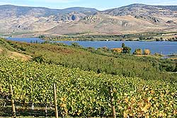 Photo by Rick BramanGroups such as the Lake Osoyoos Association and the Osoyoos Water Quality Society are working to preserve the water quality in Lake Osoyoos, viewed here from a vineyard in Oroville. The Lake Osoyoos Association recently heard there may